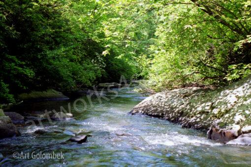 creek-in-summer