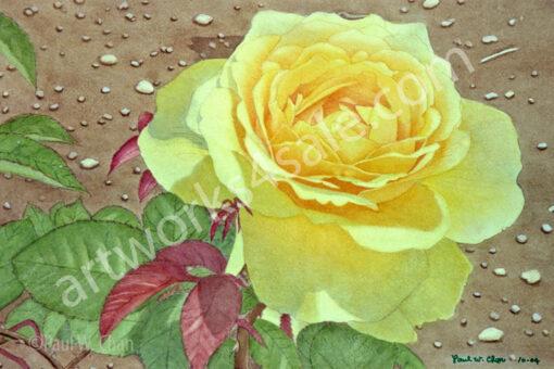 yellow-rose-2