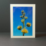 Agave-Bloom-Photo-Cards