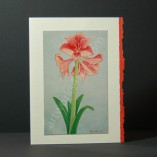 Amaryllis-1-Art-Cards