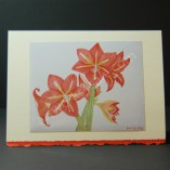 Amaryllis-2-Art-Cards