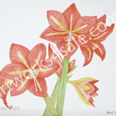 Handmade greeting cards archives artworks 4 sale amaryllis2 art cards m4hsunfo
