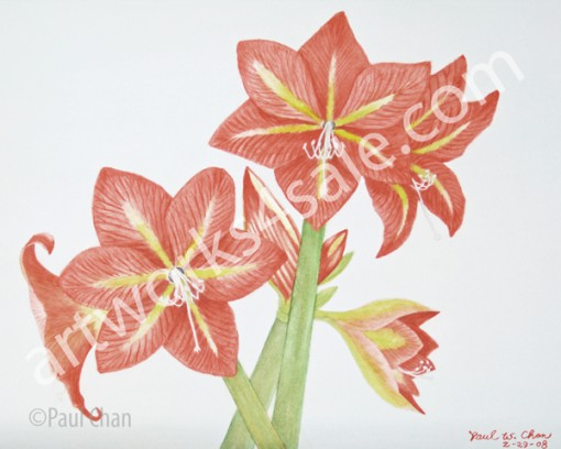 Amaryllis-2-Giclee-Art-Prints