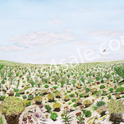 Anza-Borrego-Desert-Giclee-Art-Prints