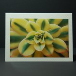 Balcony-Succulent-Photo-Cards