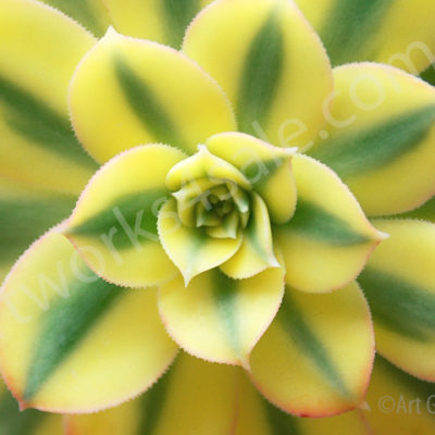 Balcony-Succulent-Photo-Prints