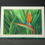 Bird-Of-Paradise-Art-Cards