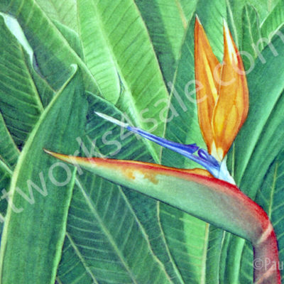 Bird-Of-Paradise-Giclee-Art-Prints