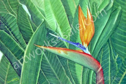 Bird-Of-Paradise-Giclee-Art-Prints