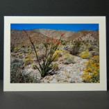 Blooming-Hillside-Photo-Cards