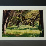 California-Oaks-Photo-Cards