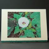 Datura-Moonflower-1-Art-Cards