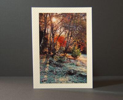 Frosty-Morning-Light-Photo-Cards