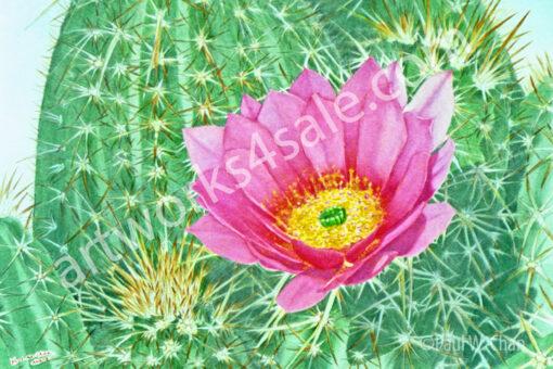 Hedgehog-Cactus-Giclee-Art-Prints