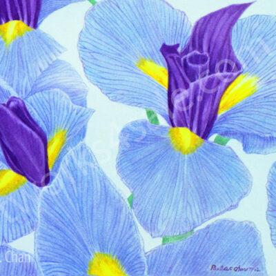 Iris-1-Giclee-Art-Prints