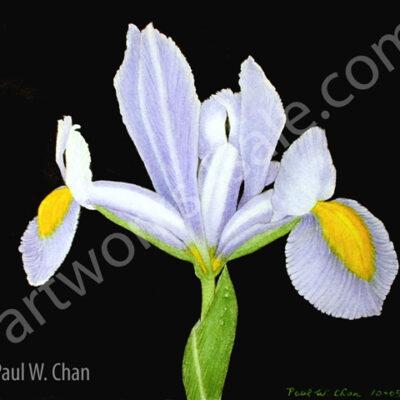 Iris-2-Giclee-Art-Prints
