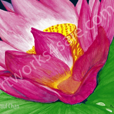 Lotus-Flower-Giclee-Art-Prints