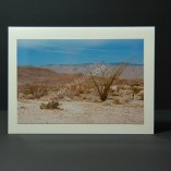 Ocotillo-At-The-Badlands-Photo-Cards