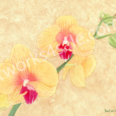Orchid-2-Giclee-Art-Prints