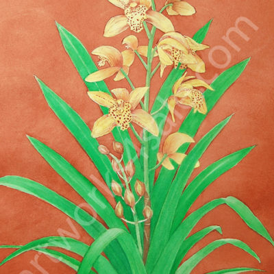 Orchid-3-Giclee-Art-Prints