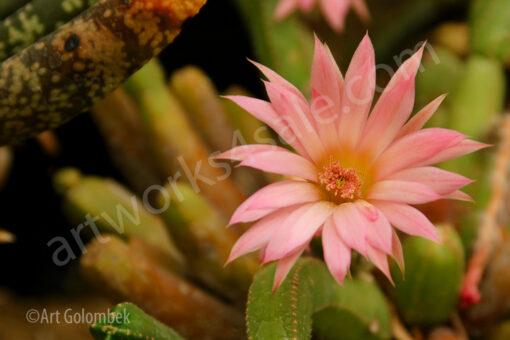 Pink-Bloom-Photo-Prints