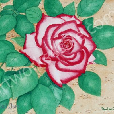 Red-White-Rose-Giclee-Art-Prints