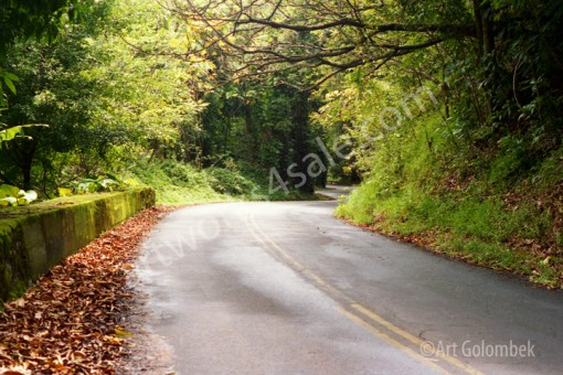 Road-To-Paradise-Photo-Prints