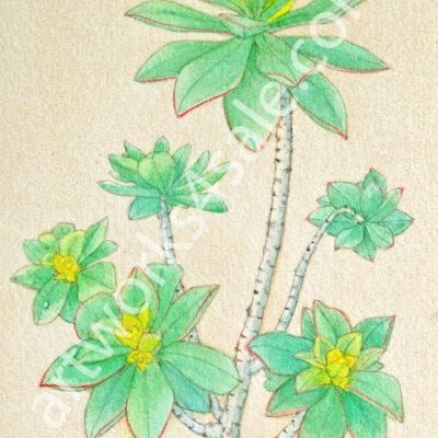 Succulent-Giclee-Art-Prints