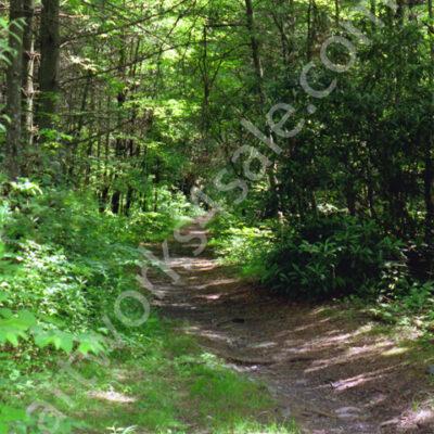 The-Path-Again-Photo-Prints