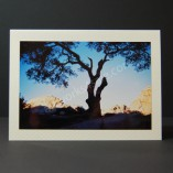 Tree-In-The-Desert-Photo-Cards