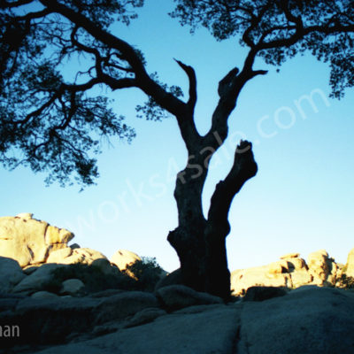 Tree-In-The-Desert-Photo-Prints