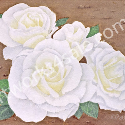 White-Roses-Giclee-Art-Prints