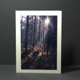 Winter-Sunlight-Photo-Cards