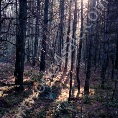 Winter-Sunlight-Photo-Prints
