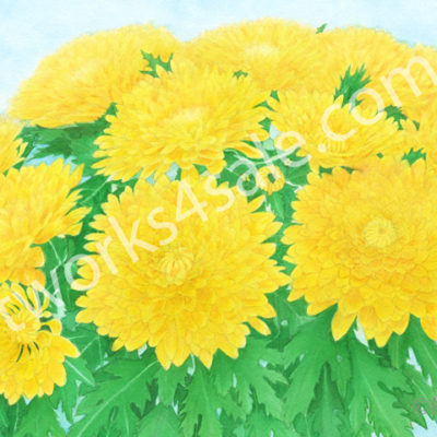 Yellow-Mums-Giclee-Art-Prints