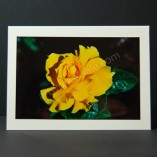 Yellow-Rose-Photo-Cards